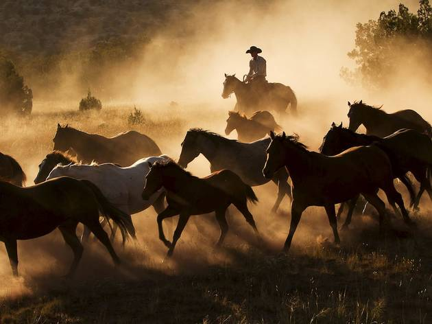 Life on an American ranch (© Liz Mardell)