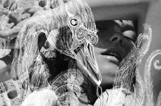 Björk, Vespertine, Facebook image