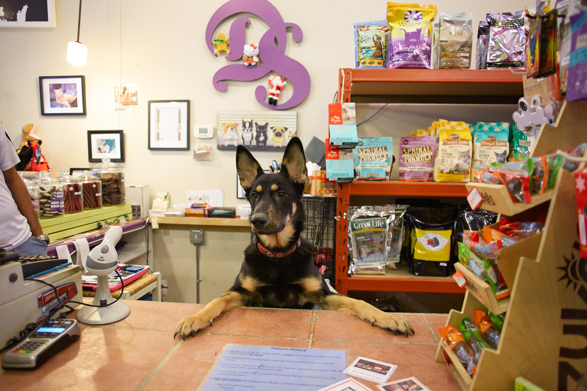 Pet stores in chicago for dog leashes cat collars and more for Fish and pet store