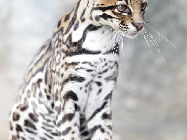 Visit the Dehiwala Zoological Garden