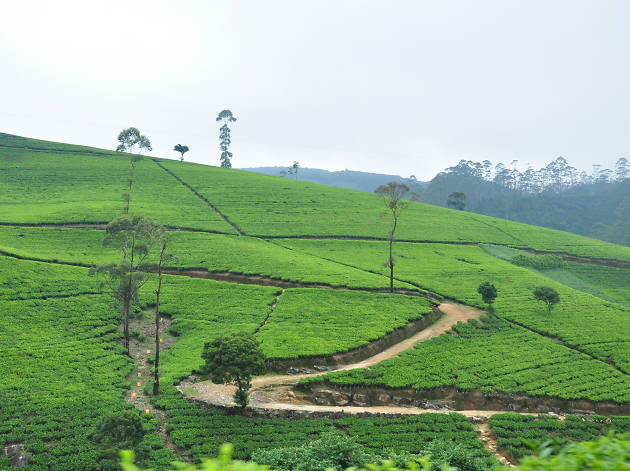 Nuwara Eliya is a tea growing region in Sri Lanka