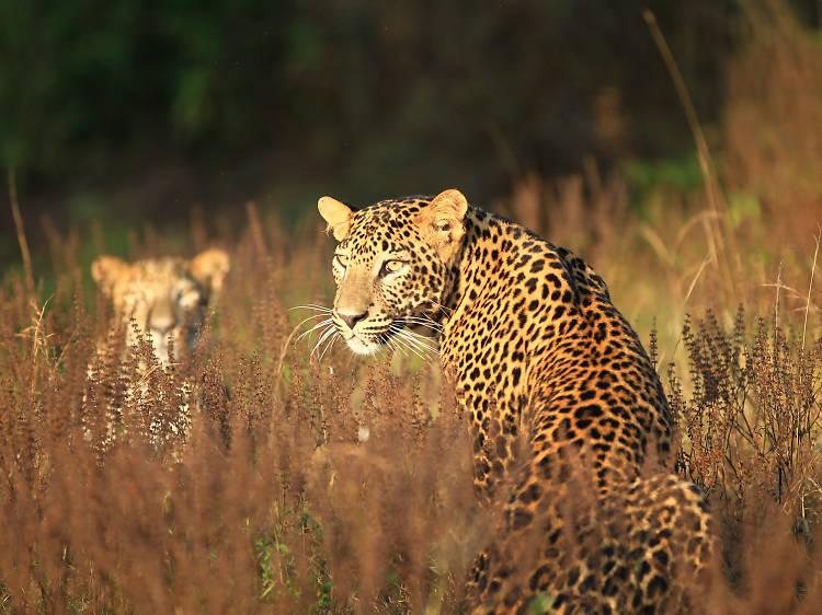 Ten must visit national parks in Sri Lanka