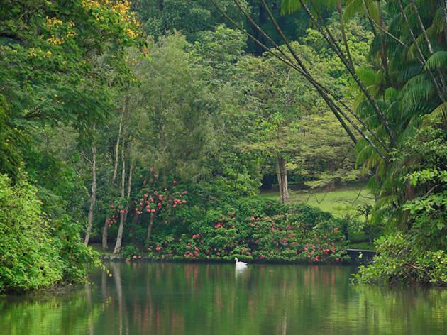 Singapore Botanic Gardens - Swan Lake