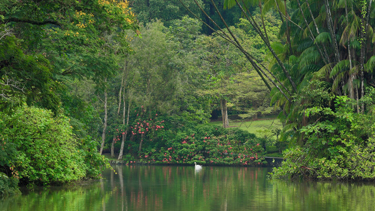 The best parks for picnics in Singapore