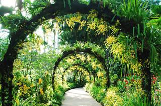 Singapore Botanic Gardens - Orchid Garden