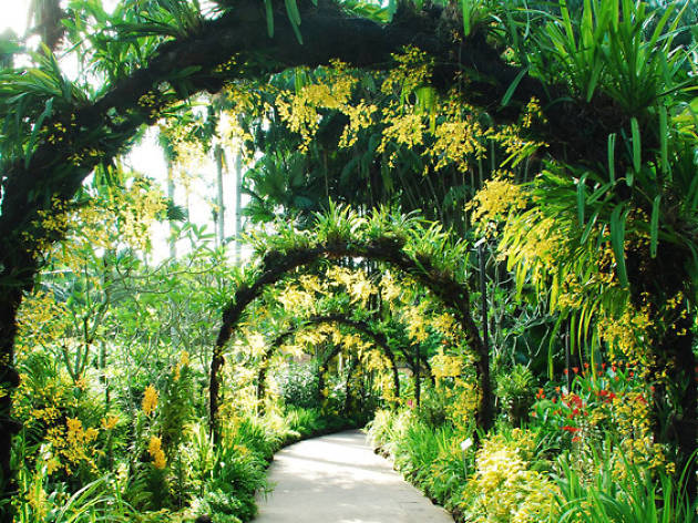 Singapore botanic gardens things to do in tanglin singapore for Botanical garden design