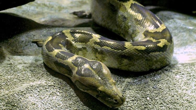 Galerie des reptiles (Ménagerie du Jardin des Plantes / Photo : © TB / Time Out)
