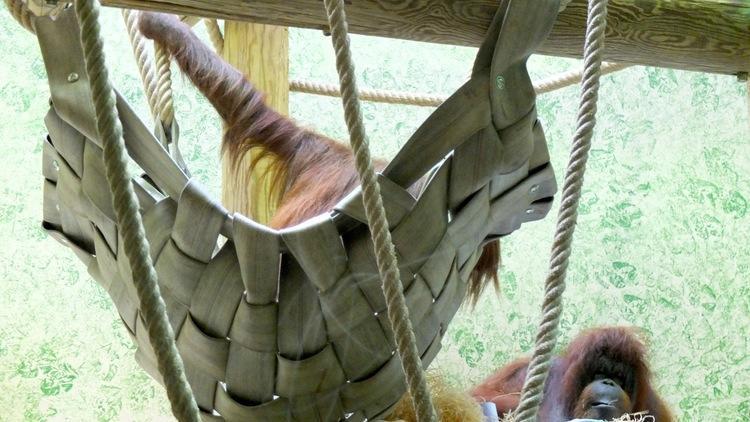 Fauverie (orangs-outans)  (Ménagerie du Jardin des Plantes / Photo : © TB / Time Out)