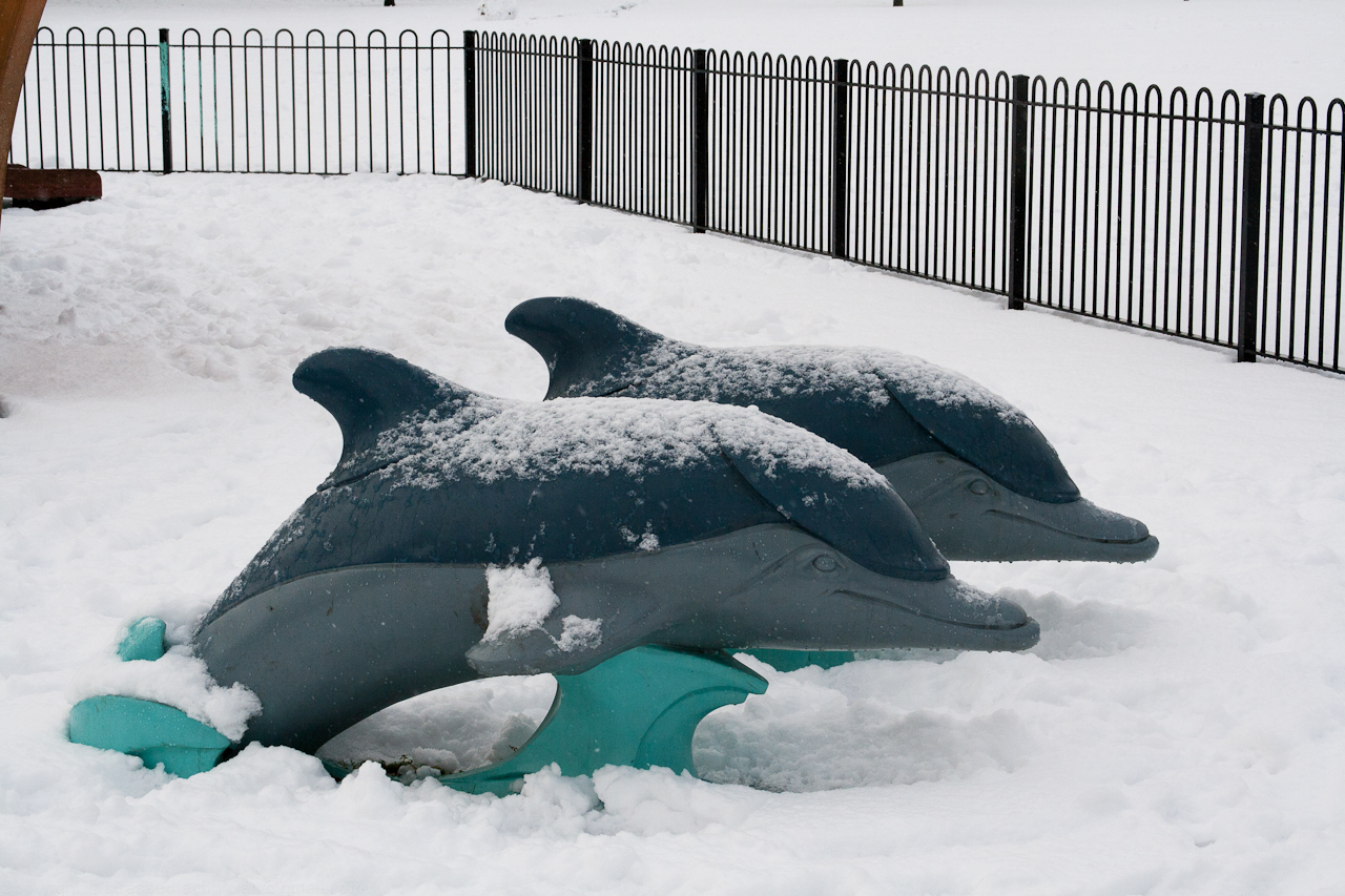 dolphins in the snow
