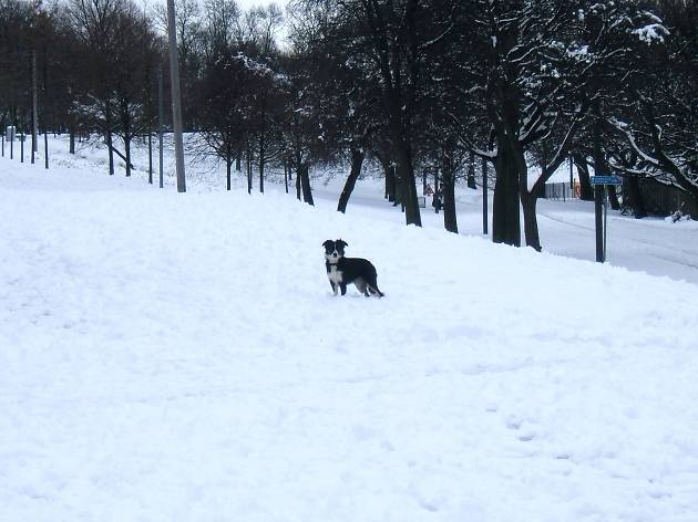 Snow dog, Glasgow Green