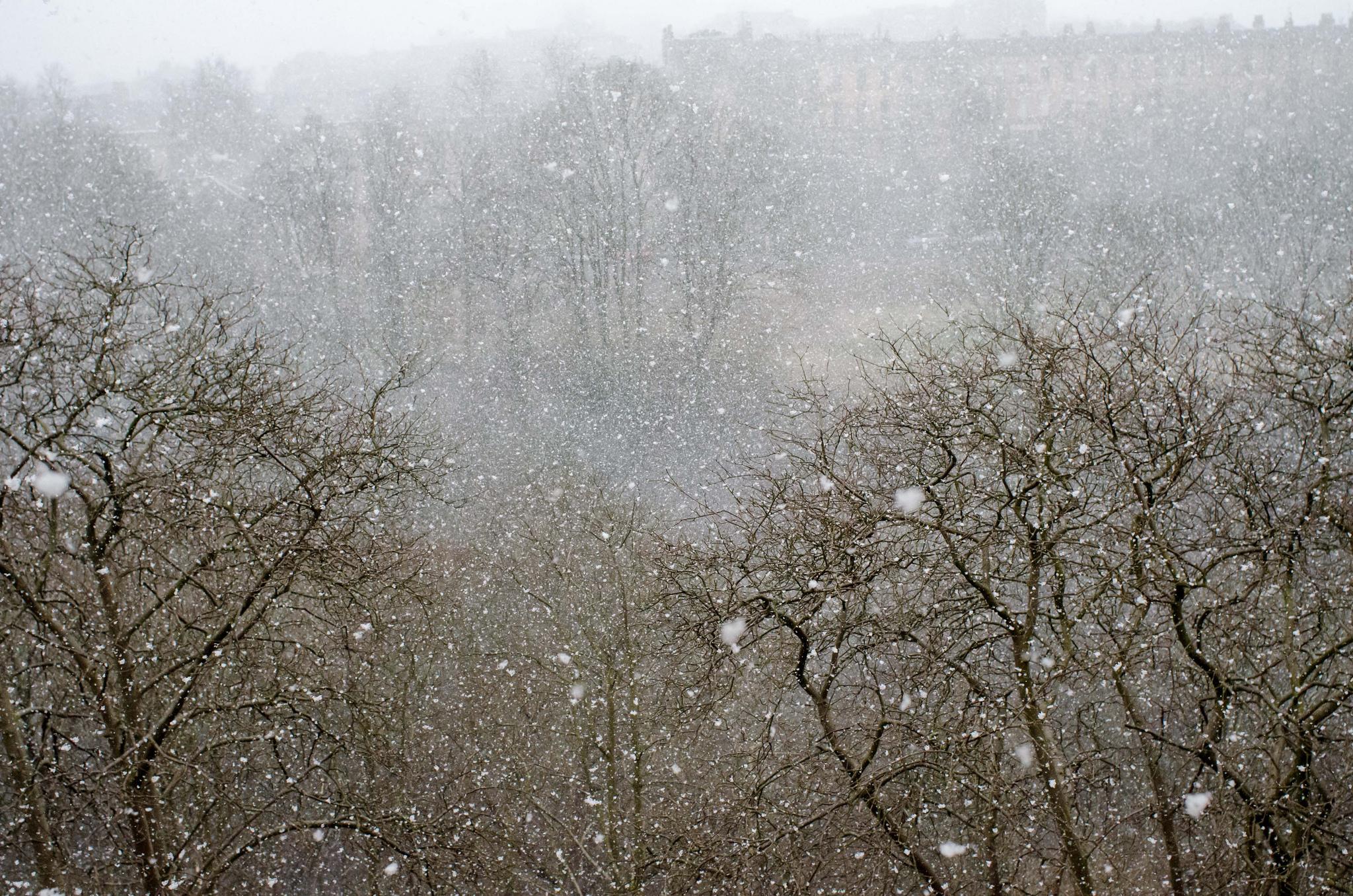 Snowy Kelvinside