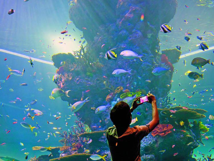 SEA Aquarium at Resorts World Sentosa