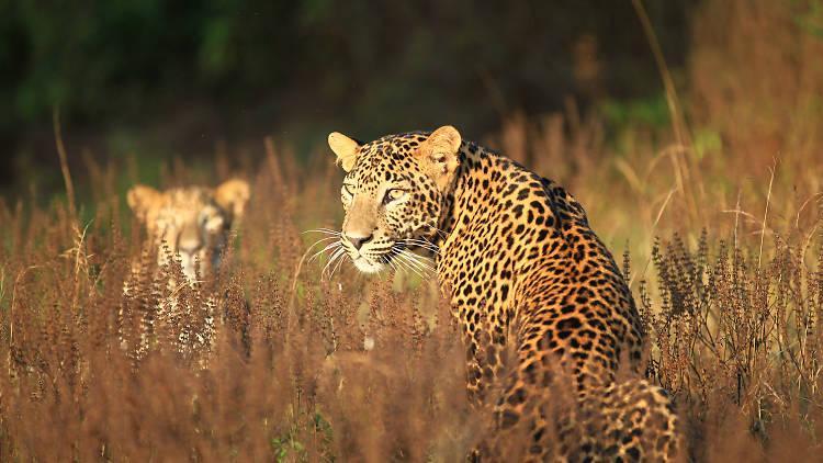 Wilpattu National Park is a national park in Sri Lanka