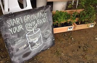 Sayurday with Eats, Shoots & Roots