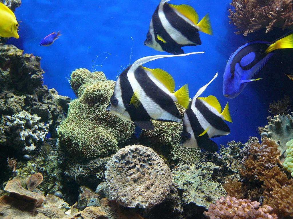 Une visite de l'Aquarium de Paris