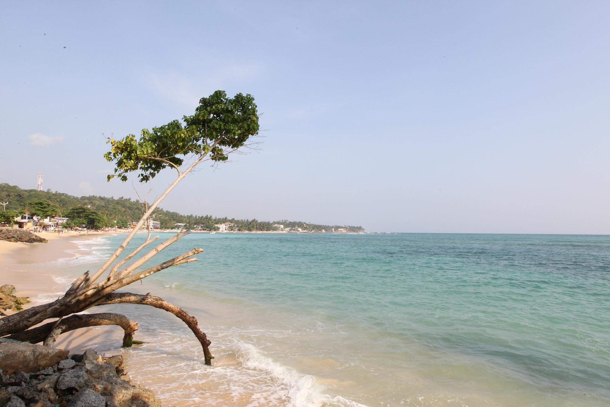 A peaceful sunbathing spot