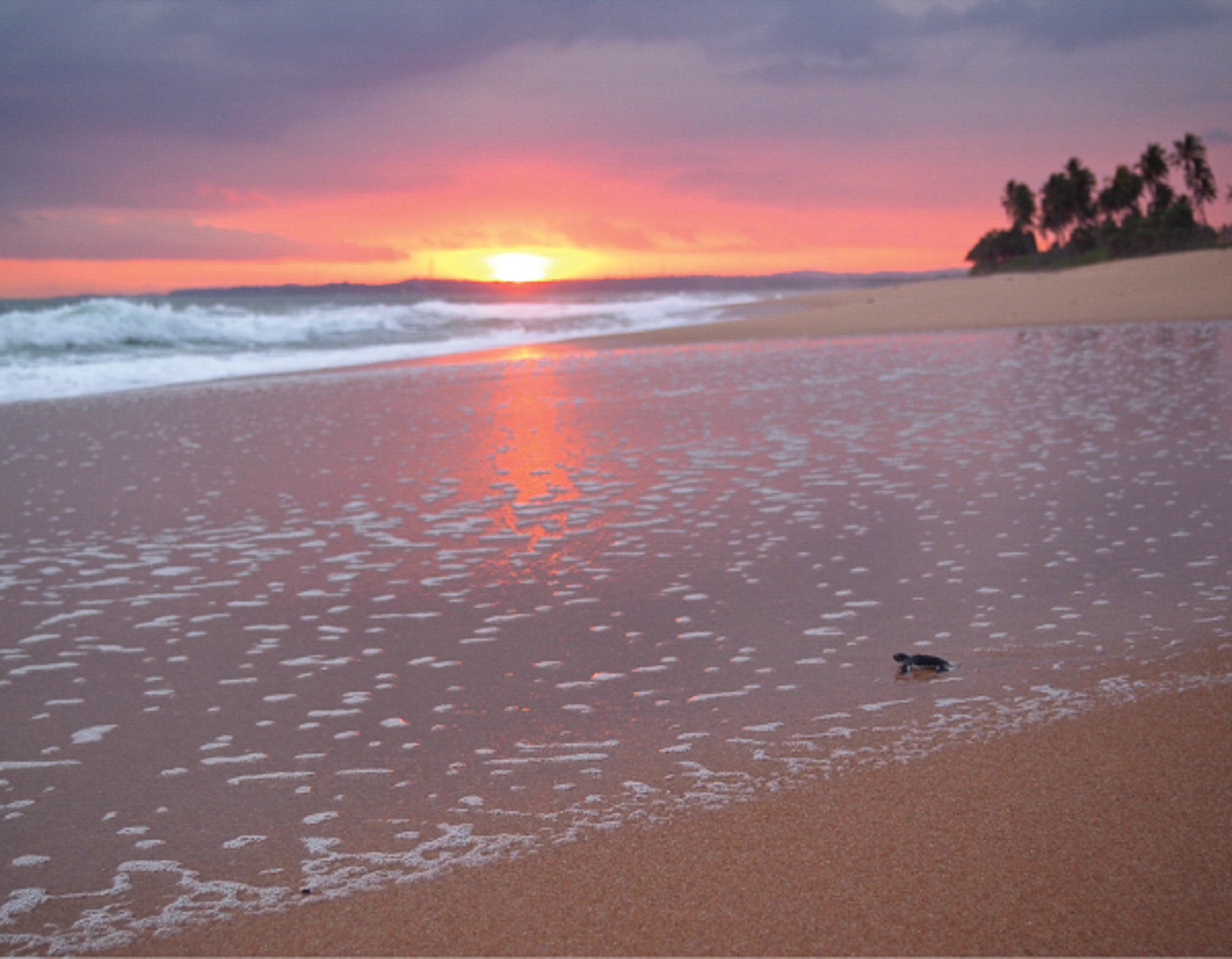 A popular site to spot turtles