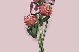 Ulysse & Darcoe ('Fleur viande' / ©Ulysse & Darcoe)