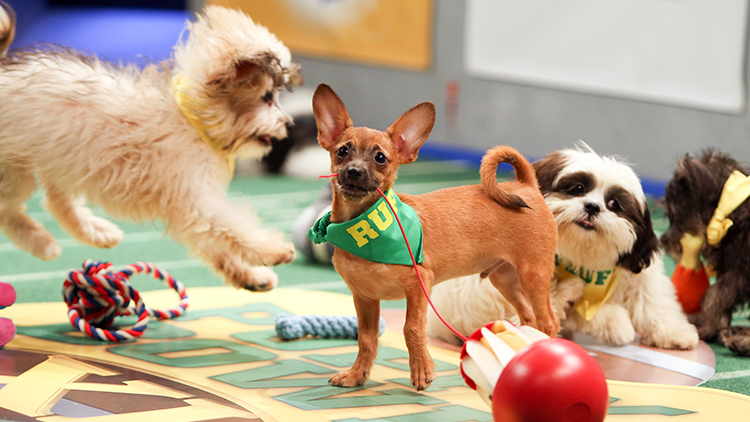 Photos of the Puppy Bowl XI lineup