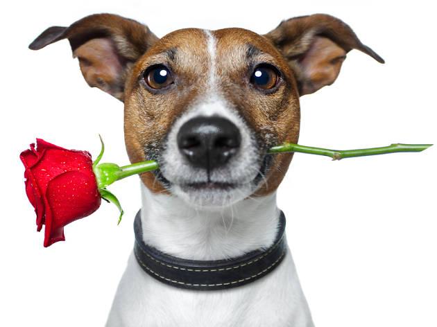 All Dogs Matter Valentines Dog Walk