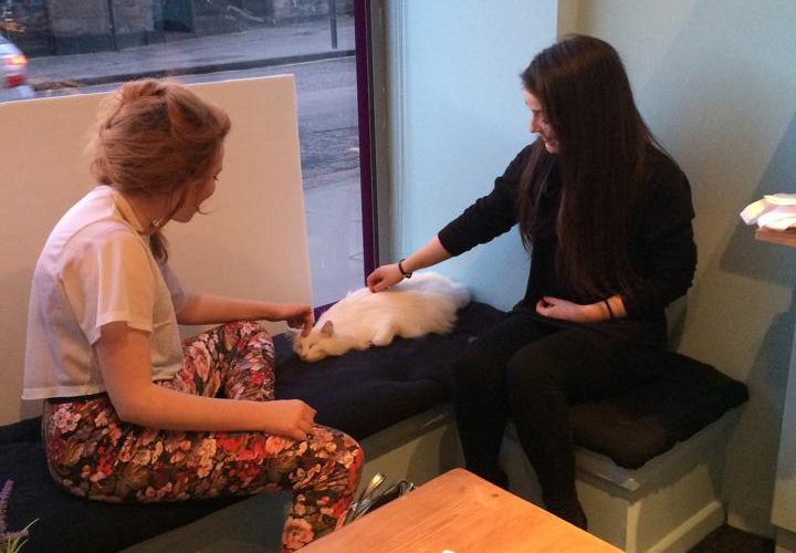Second Edinburgh cat café on its way