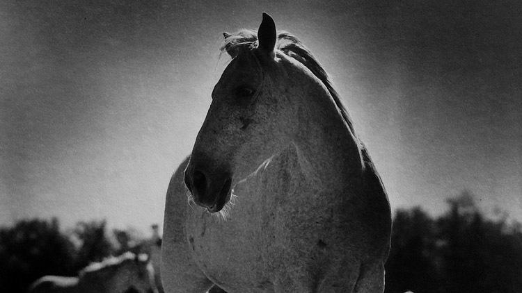 Billy Mork: Horses' Home Sweet Home
