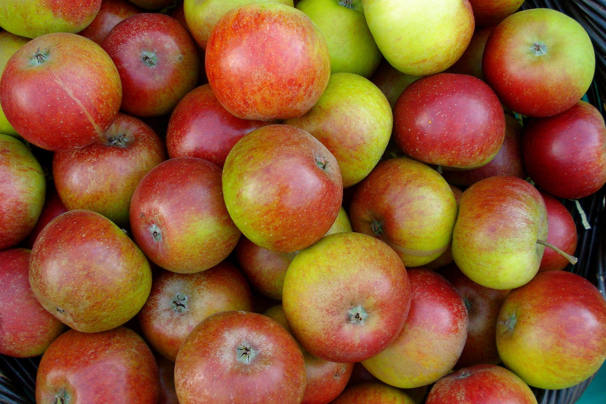 Apples, Cori Tap, Cider