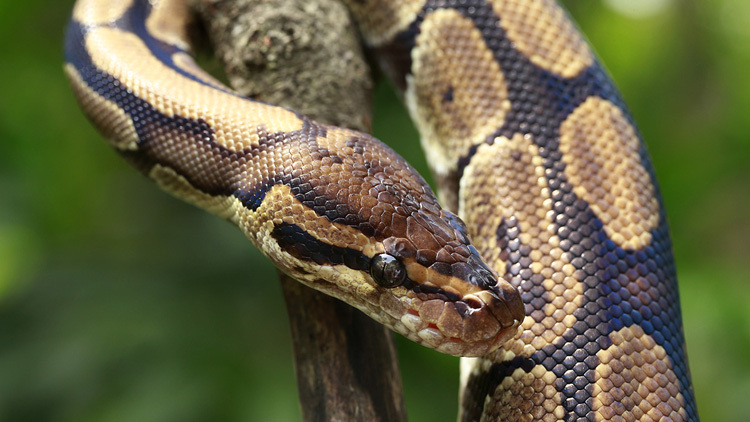 Singapore Zoo - Snake