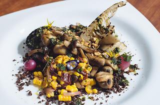 Plonk - medley of mushrooms
