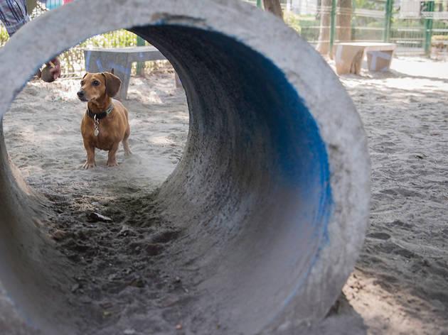 Parque canino Jardín Pushkin (Foto: Jordana Btp)