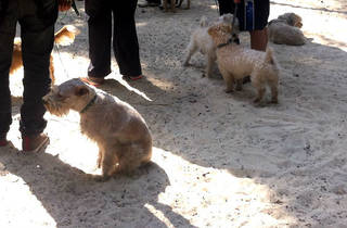 Parque canino (Foto: Time Out México)