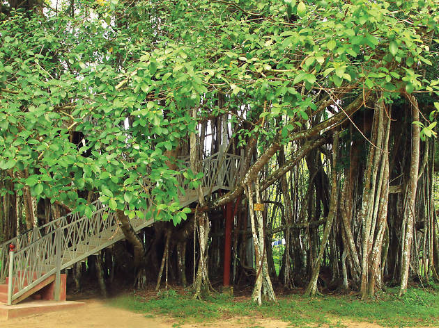 Henarathgoda Botanical Garden