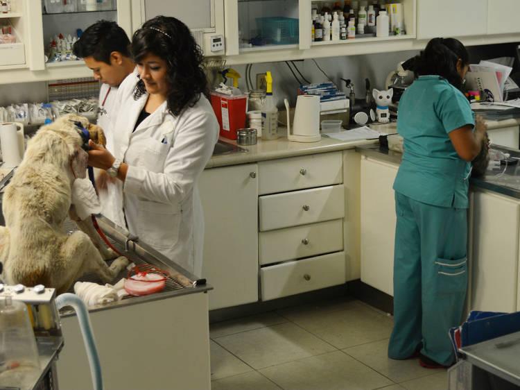 Ciudad de los Deportes. Centro Veterinario México