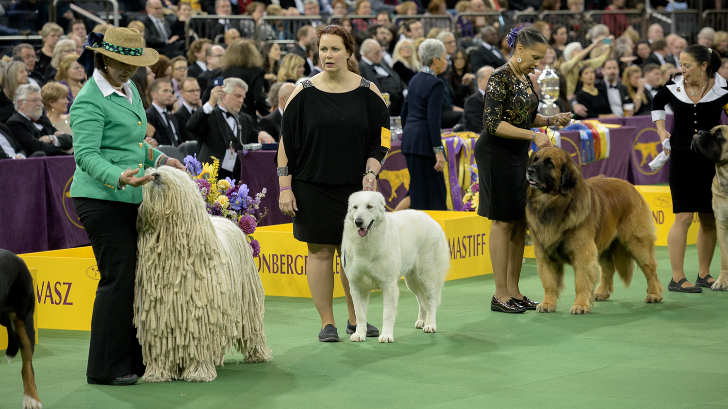 Westminster Dog Show 2015 See Photos Of The Annual Dog Show At Madison Square Garden
