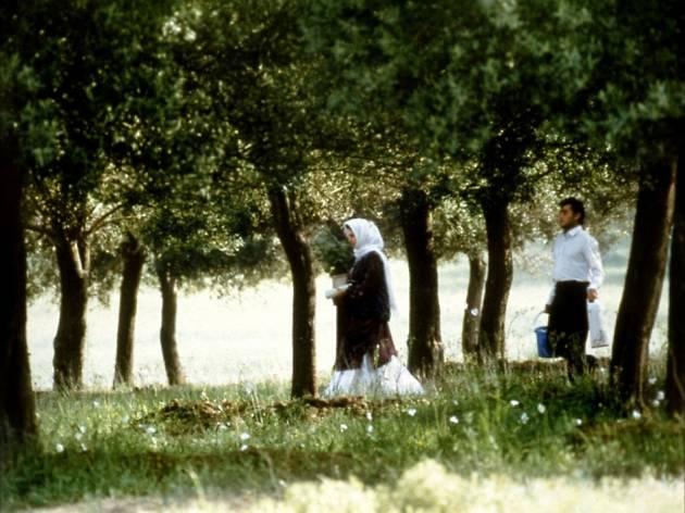A través de los olivos