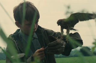 A still from the film Kes or a boy standing amongst grass with a kestrel perched on his hand