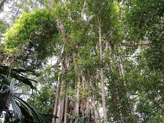 Singapore Botanical Gardens - Rain forest Trail