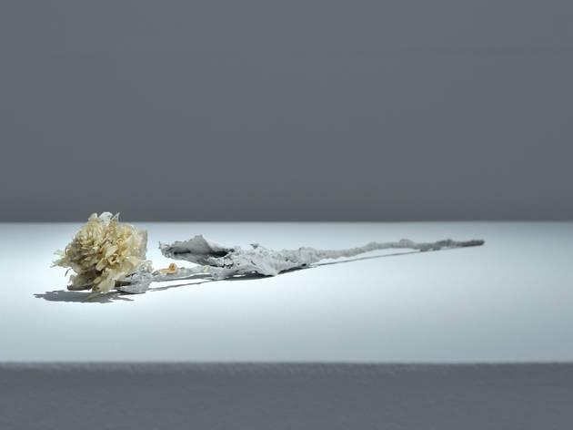 (Lionel Sabatté, 'Rose blanche', 2013 / Courtesy de l'artiste)
