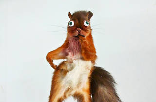 sexy red squirrel