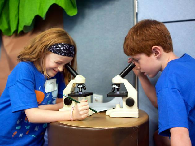 Shedd Aquarium camps