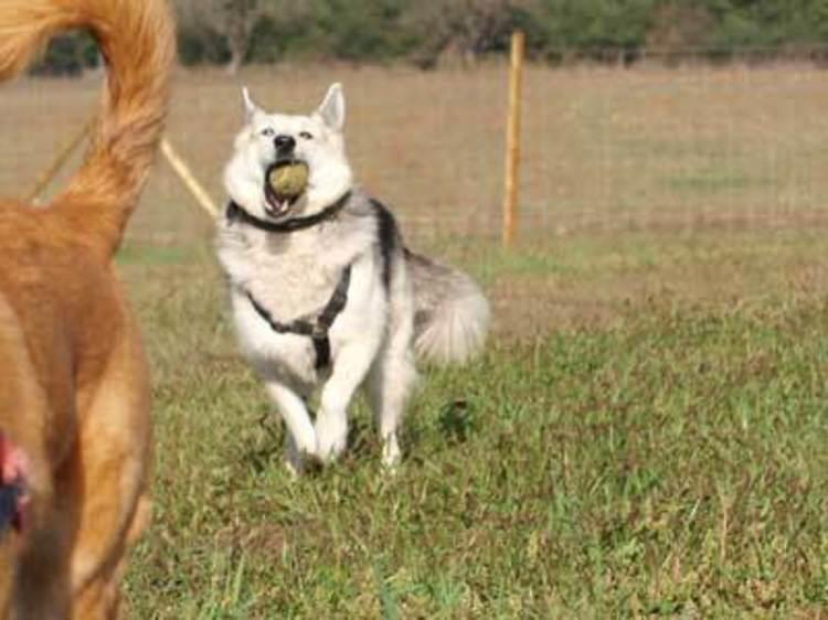 Diversió canina