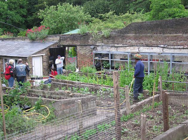 (Streatham Common Community Garden)