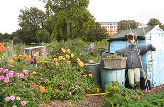 (Fulham Palace Meadows Allotments © Edwina Sassoon)