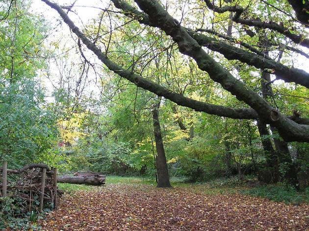 (Barnsbury Wood)