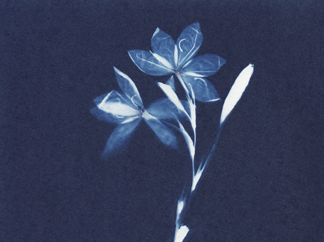 Cyanotype Printing with Anne Parouty