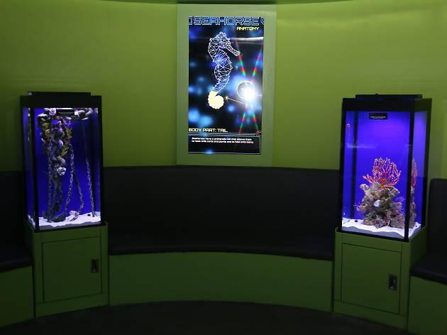 Seahorse Lab