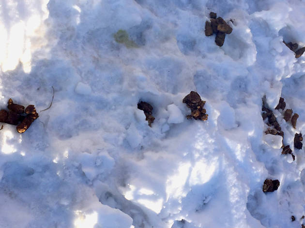 So much dog poop
