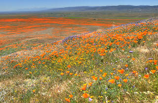 Everything you need to know before heading to the Antelope Valley Poppy Reserve