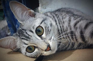 Mandy (Foto: Cortesía Christian Zamora)