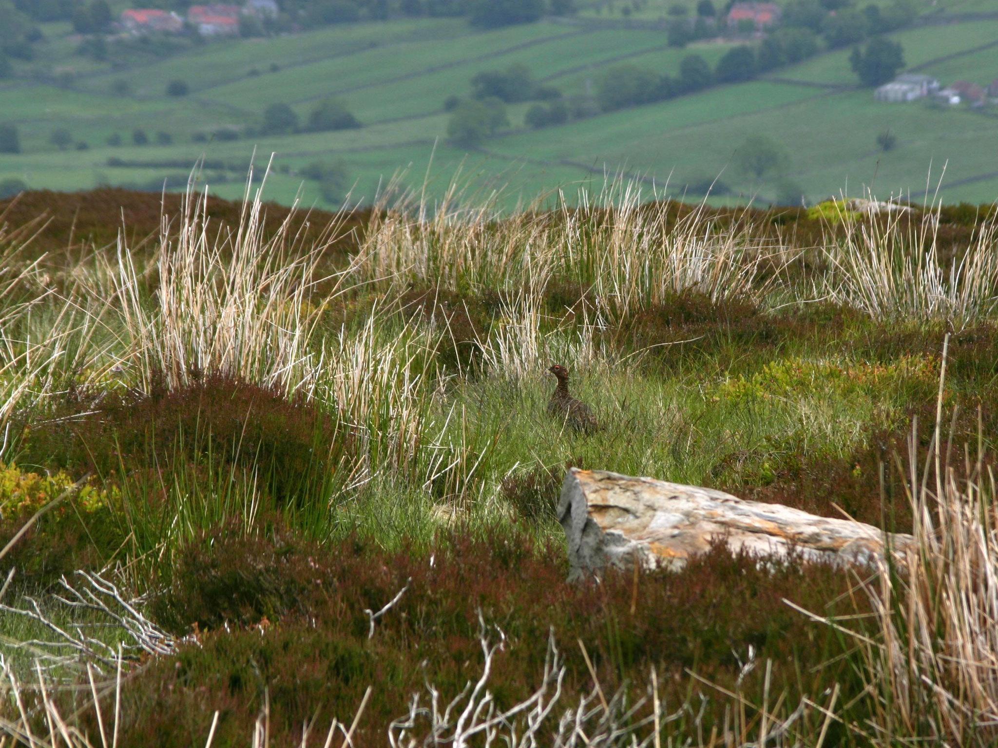 Tumbling hills